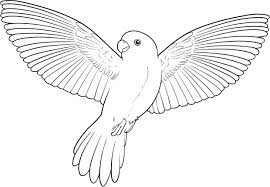 Small Picture Printable Parrot Coloring Pages Coloring Me