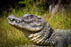 2017 Alligator Price Chart Florida No Price For Gators Low Engagement Predicted For Alligator