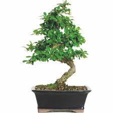 office tree. Office Tree