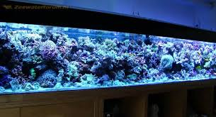 Image result for pretty large tank for aquariums