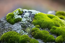 500+ Moss Pictures | Download Free Images on Unsplash
