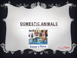an essay on domestic animals for kids in english language an essay on domestic animals for kids in english language
