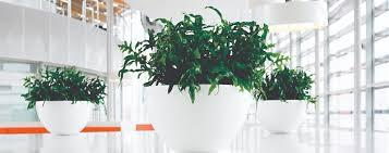 Interior landscaping office Luxury Hotel Indoorliveplantdisplays Plant Solutions Urban Planters Indoor Office Plants Living Green Walls Interior
