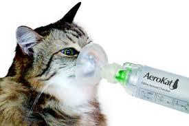 Feline Asthma - Chronic Bronchitis In Your Cat