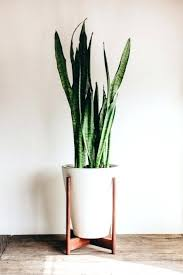 tall indoor plant pots nice cool decorative flower pots indoor plants plant  pot best large indoor