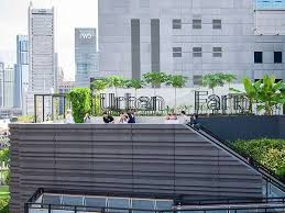 urban rooftop farming is becoming more