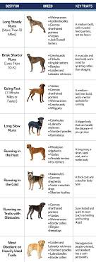 10 Best Large Dog Breeds For Runners There Are Plenty Of