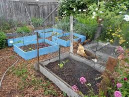 Kitchen Garden Hens July 2012 Garden Rant