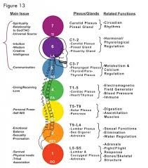 How Chakras Work The Development Of Physical Mental