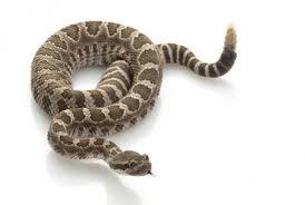 Snake white background Stock Photos & Royalty-Free Images | Depositphotos
