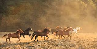 wild horses running.  Horses Wild Horses Running On Wild Horses Running