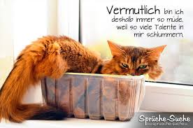 Müde Sprüche Katze Sprüche Suche