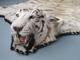 real white tiger skin rug