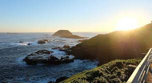 Melbourne To Phillip Island Tour Things To Do Tickets