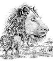 Domestic Lion Jerusalem House