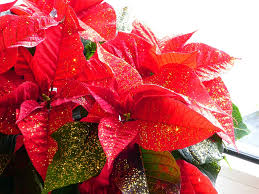 Nr 40 Weihnachtsstern Micksblogs