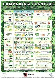 Square Foot Garden Plant Spacing Chart Square Foot Garden Spacing Athayasimple Co