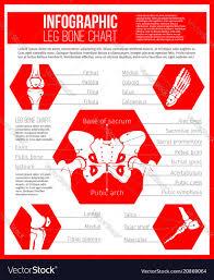 Anatomy Chart Of Human Bones For Medicine Design