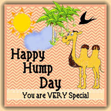 Camel Happy Hump Day Quote Pictures Photos And Images For Facebook