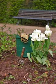 bucket gardening. Grass Plant Lawn Leaf Flower Spring Green Backyard Botany Garden Flora Bucket Gardening Bed Woodland Yard