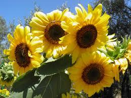 Bilderesultat for sommer og sol bilder