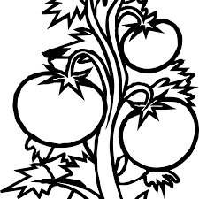 tomato clipart black and white. Vector Freeuse Download Plant Tomato In Clipart Black And White