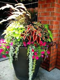 plants for porch planters best plants for front porch impressive plants for outside planters best front