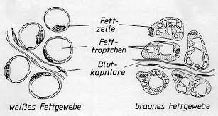 Braunes Fett - W wie Wissen - ARD Das Erste
