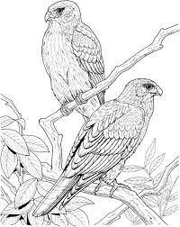 Small Picture 19 best coloring pages birds images on Pinterest Draw Coloring