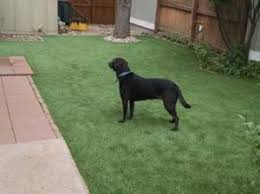 artificial grass for pets. Artificial Grass Safe For Pets