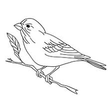 bird coloring pages. Fine Coloring With Bird Coloring Pages A