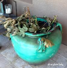 Image result for dead plants in a pot