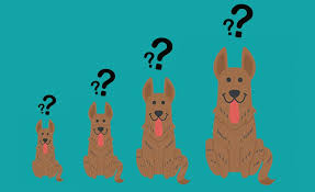 Tips For Estimating Your Dogs Full Grown Size
