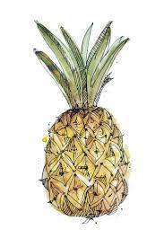 pineapple drawing tumblr. pin drawn pineapple water tumblr #7 drawing b