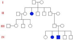 How To Pedigree Chart Nicks Genetics