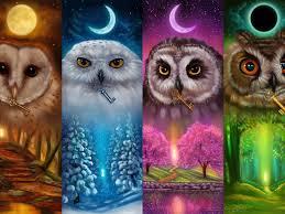 Colorful owls, four season, art picture ...