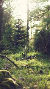 Ray Of Light On Green Forest Floor ...
