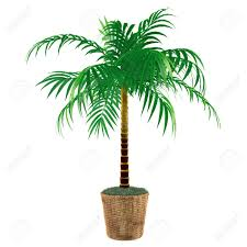 Decorative Indoor Trees Indoor Palm Tree Stock Photos Pictures Royalty Free Indoor Palm