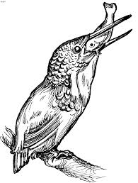 Small Picture Birds Coloring Pages Kids Website For Parents