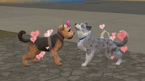 dogs and cats mating together. Modren Cats Her Female Cat Libby Got Pregnant Right Away But Her Yorkie Domo Took A  Few Tries To Conceive Just Like With Sims Pregnancy Isnu0027t Always Guaranteed  And Dogs Cats Mating Together L