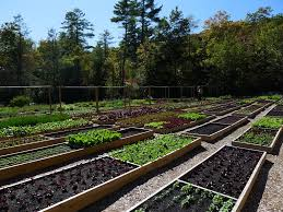 Organic Kitchen Garden With A Southern Twist Good Living In Todays South A Madisons