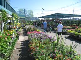 garden store morristown nj. morristown agway nursery garden store nj o