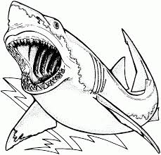Coloriage Requin Gratuit Imprimer L L