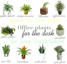 office plants no light. Office Plant Light Best Plants For Interesting No Imposing Ideas Find A Way By Low Fluorescent 5