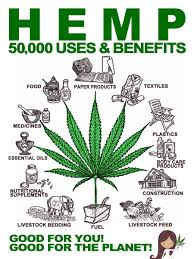 hemp oil is good for you