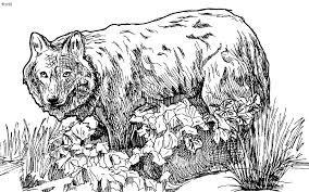 Wolf Coloring Pages Free Realistic Werewolf Chronicles Network