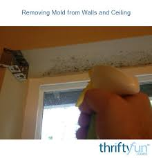 how to clean mold on painted walls and