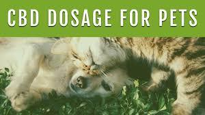 Cbd Dosage For Pets Shiny Happy Pets