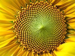 Resultado de imagen de Simetría en las plantas y en las flores