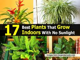 plants for windowless office. 17 best plants that grow indoors with no sunlight for windowless office e